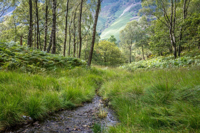 King's How walk, Borrowdale, Cummacatta Wood