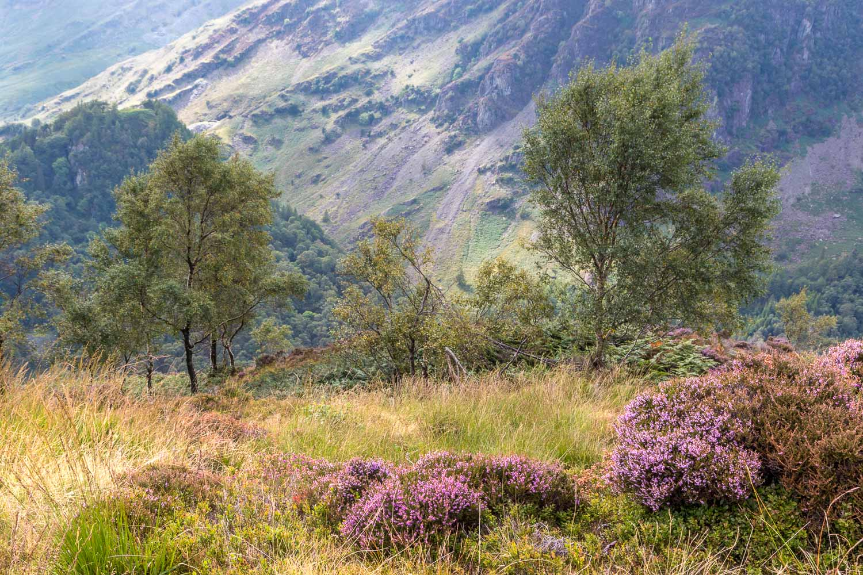 King's How walk, Borrowdale, Castle Crag