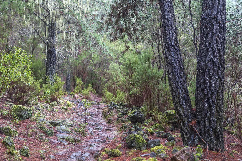 La Caldera walk Tenerife