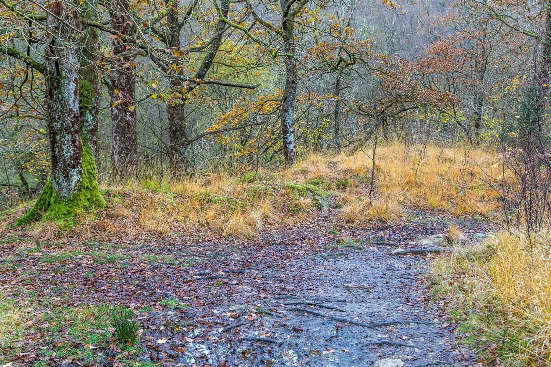 Langdale woods