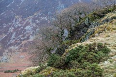 Brackenthwaite Hows or Lanthwaite Hill