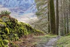 Lanthwaite Wood walk