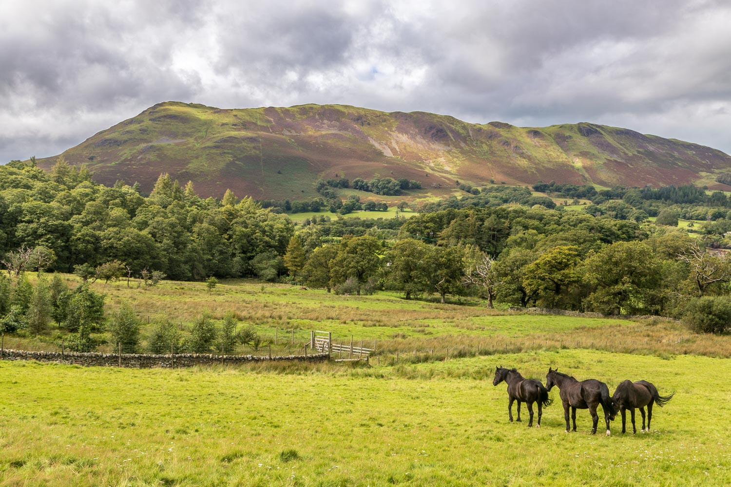 Low Fell, horse
