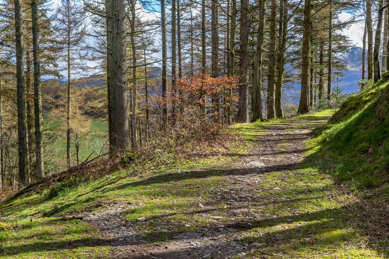 Lanthwaite Wood