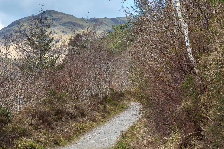 Low Fell, Lanthwaite Wood