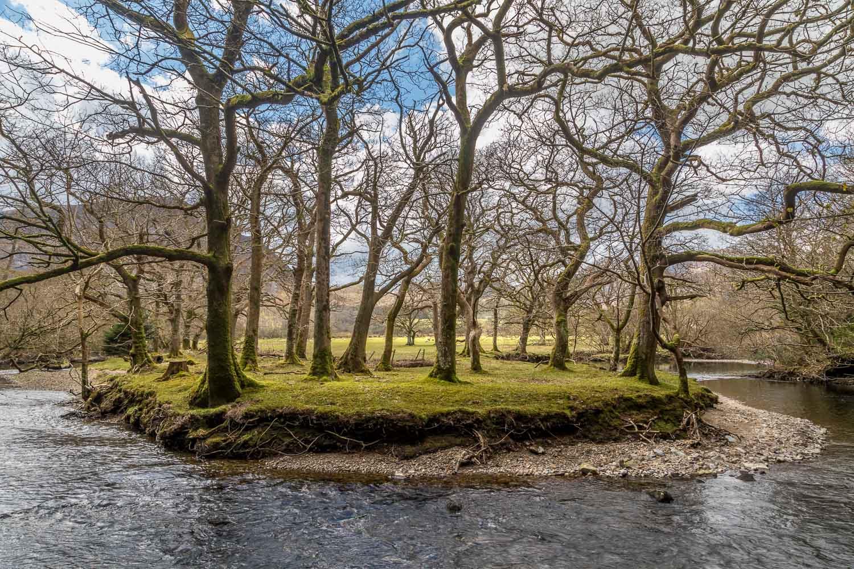 Lanthwaite Wood walk, River Cocker