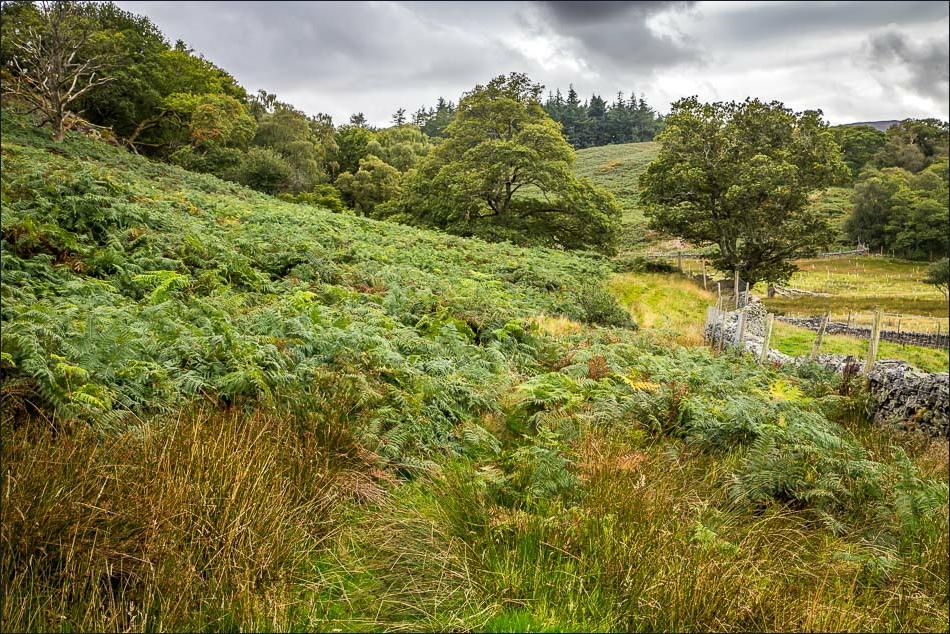 Lanthwaite Hill