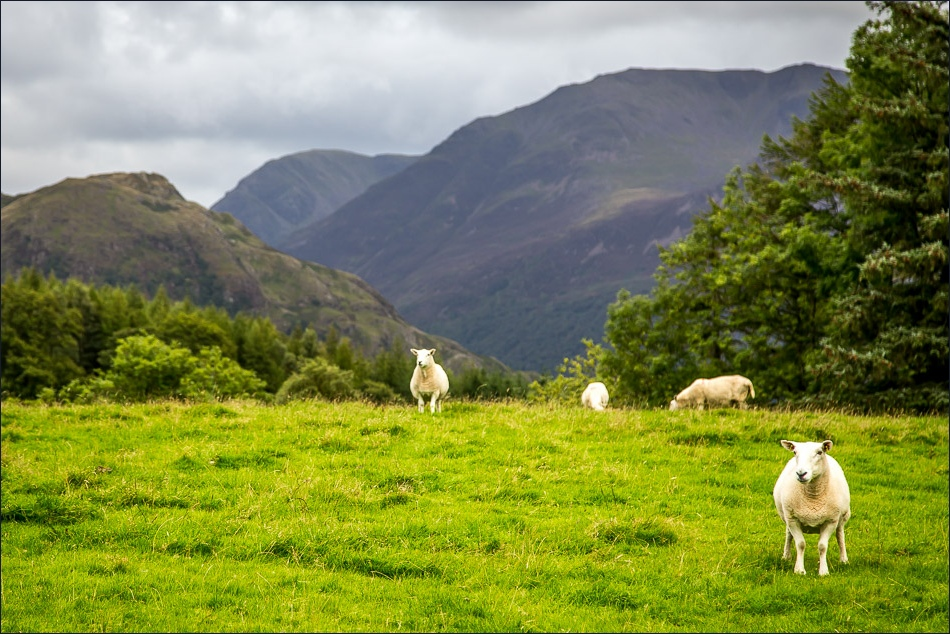 Rannerdale Knotts and the Buttermere Fells