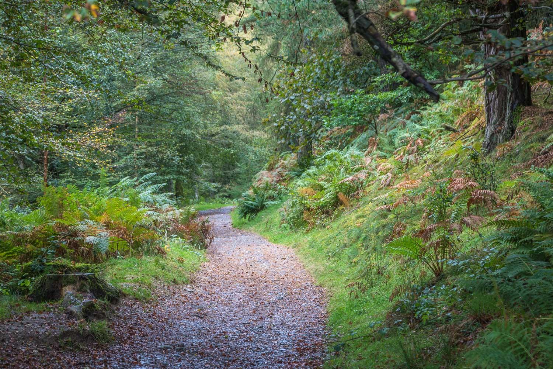 Latrigg walk, Latrigg Wood