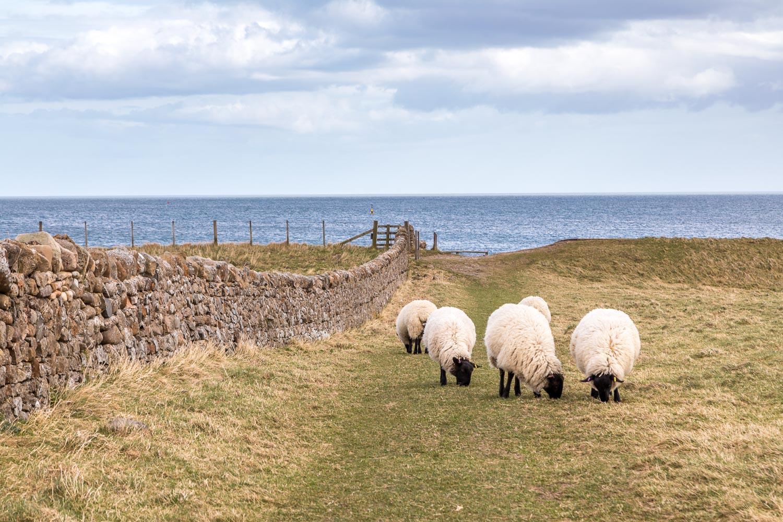 Holy Island walk, Lindisfarne walk