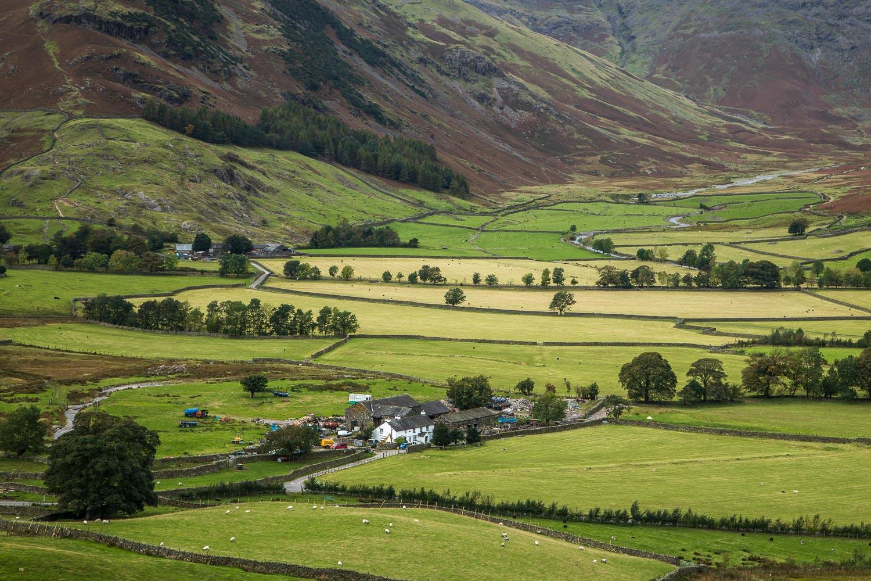 Lingmoor Fell2-43