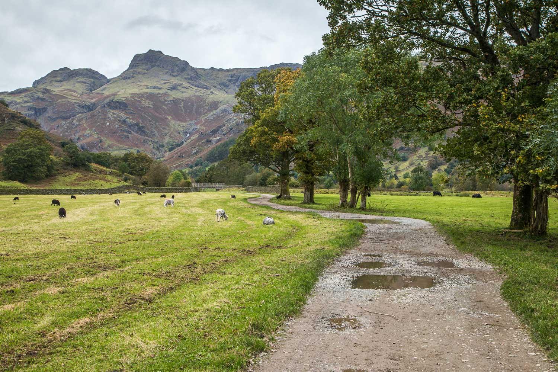 Lingmoor Fell walk, Langdale Pikes