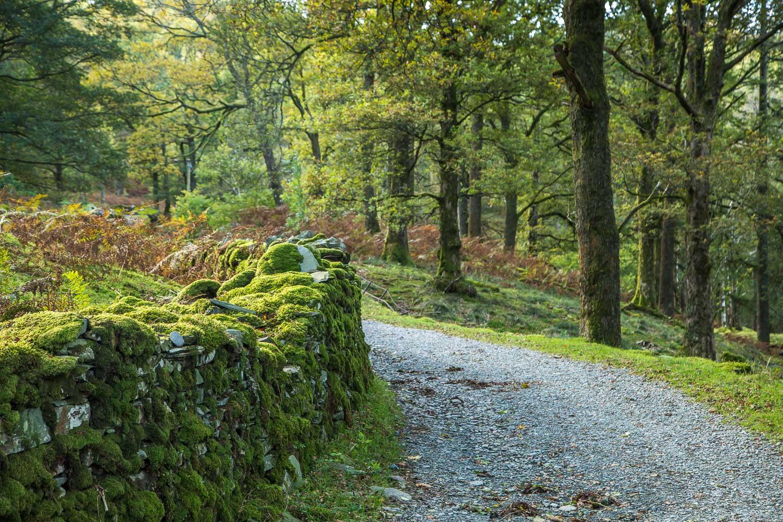 Lingmoor Fell walk, Sawreys Wood