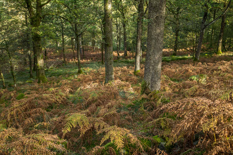Lingmoor Fell2-9