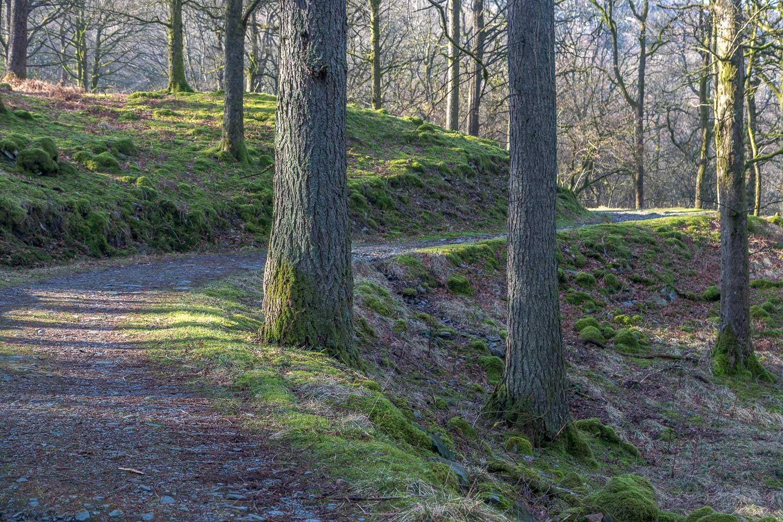 Lingmoor Fell walk, Sawrey's Wood