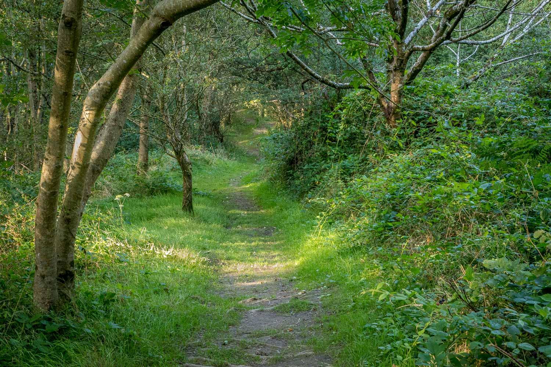 Little Haven walk