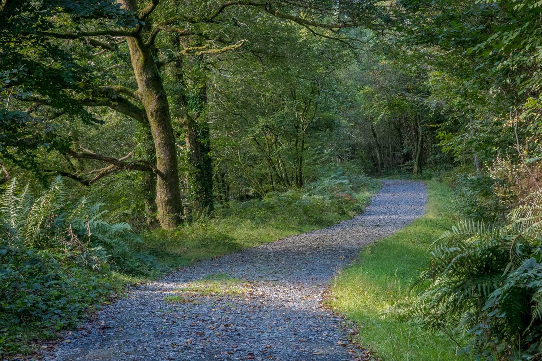 Llyn Crafnant walk