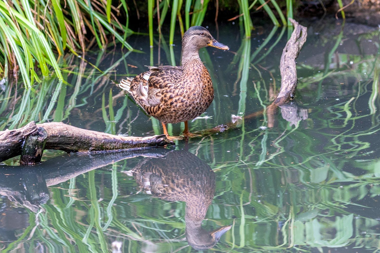 London Wetlands-16