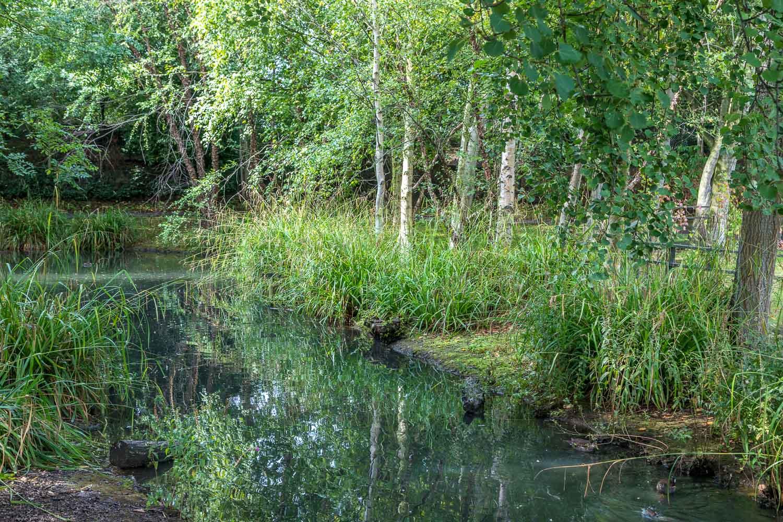 London Wetlands-19