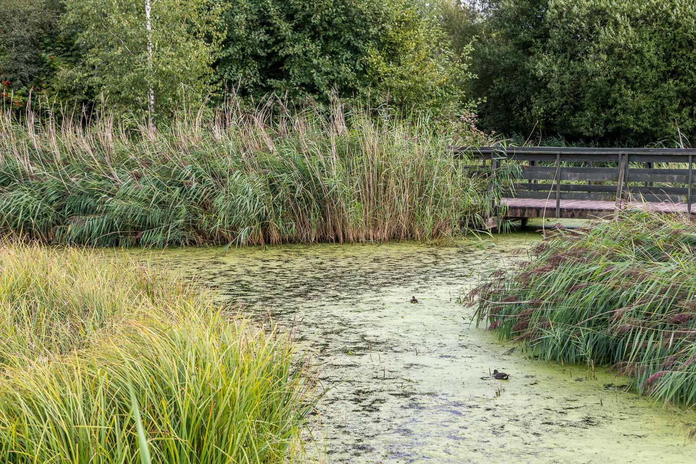 London Wetlands-34