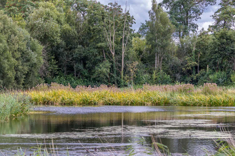 London Wetlands-35