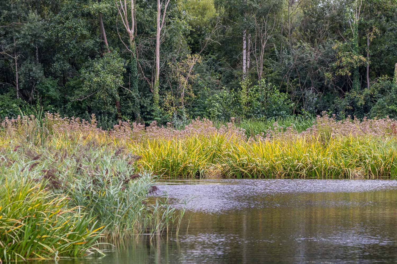 London Wetlands-36