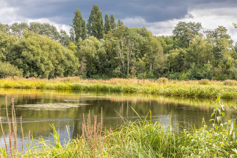 London Wetlands-37