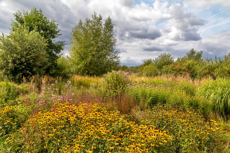 London Wetlands-40