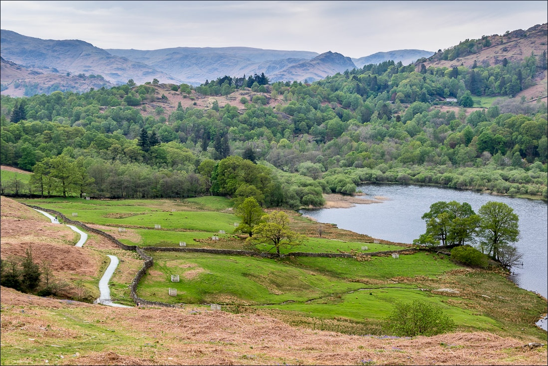 Rydal Water from Loughrigg Terrace