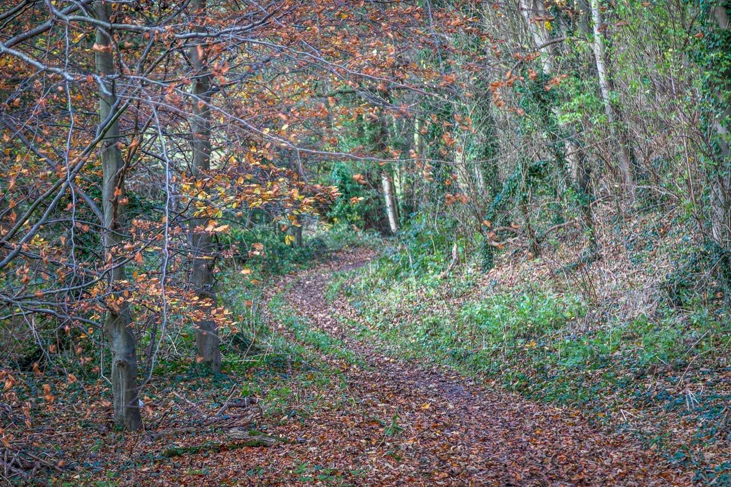 Louth walk, Welton Vale