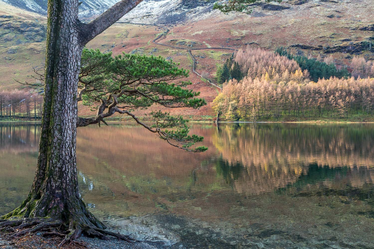 Buttermere, Burtness Wood