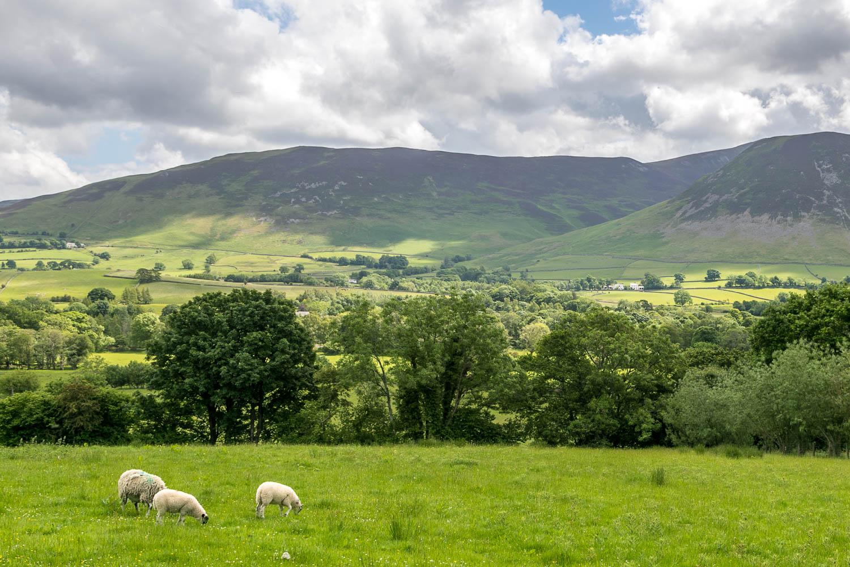 Low Fell walk, Lorton Vale, Ladyside Pike