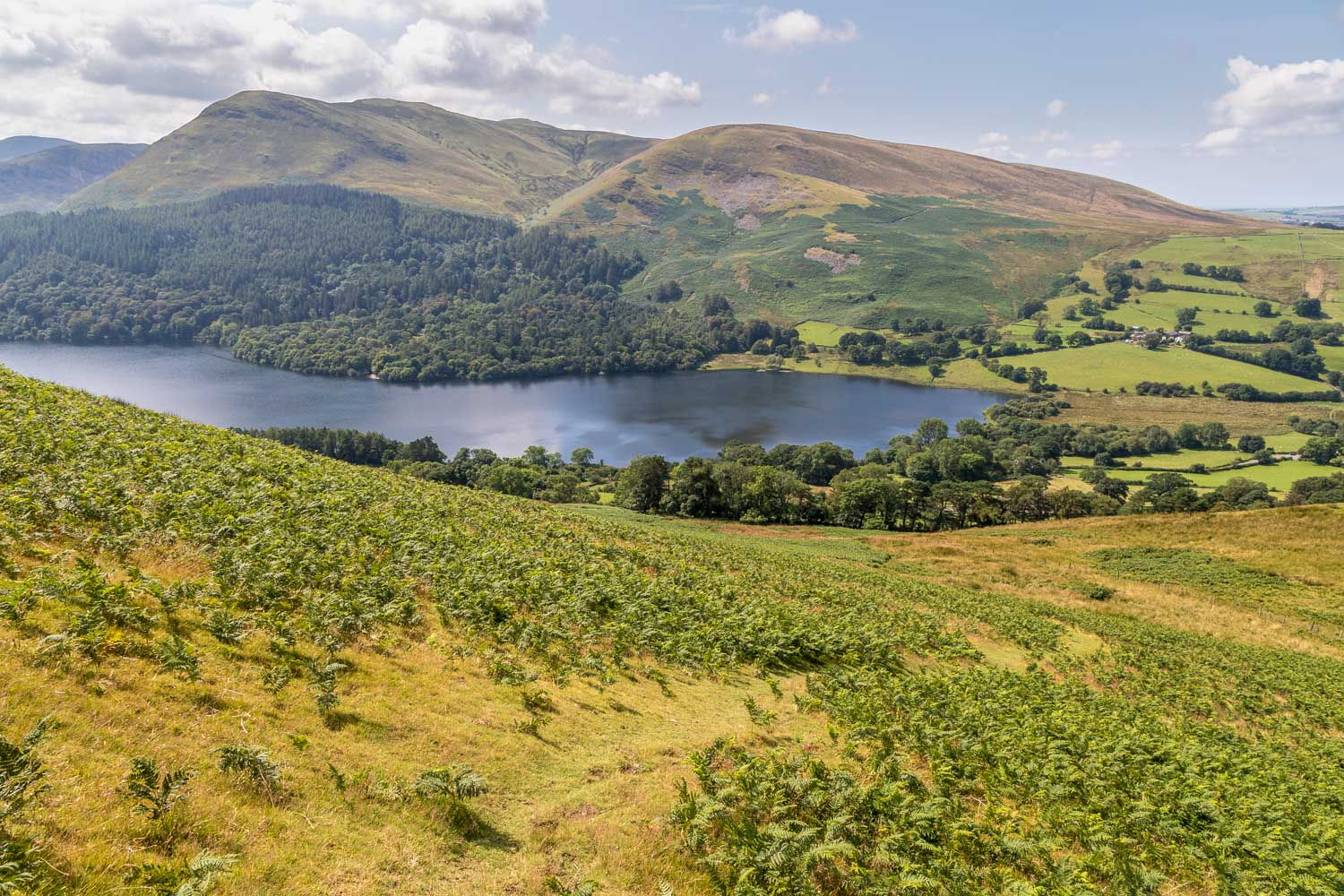 Darling Fell walk, Loweswater, Holme Wood