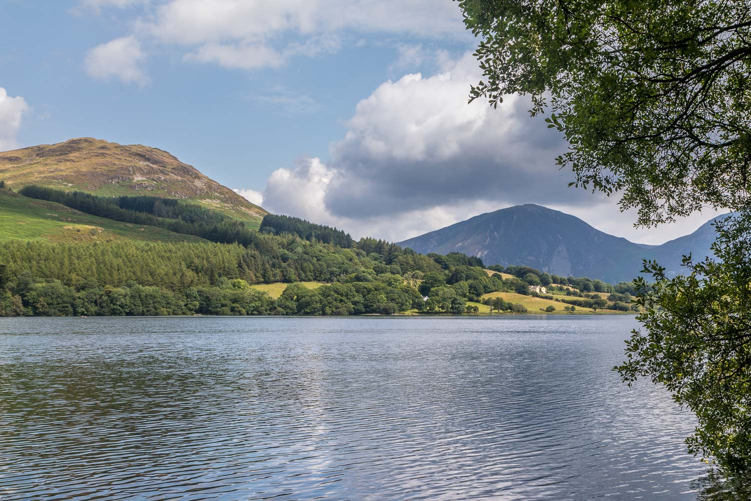 Loweswater walk, Low Fell, Holme Wood