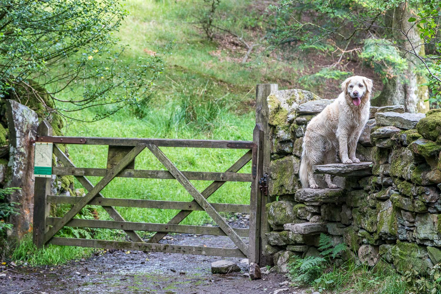 Loweswater-23-17