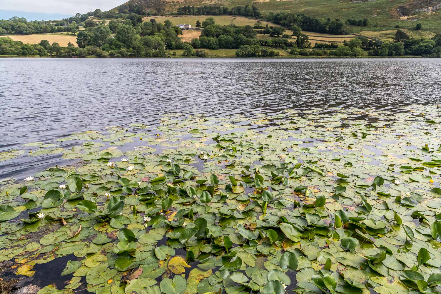 Loweswater-23-18