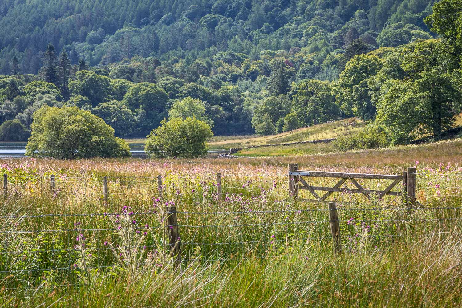 Loweswater-23-34
