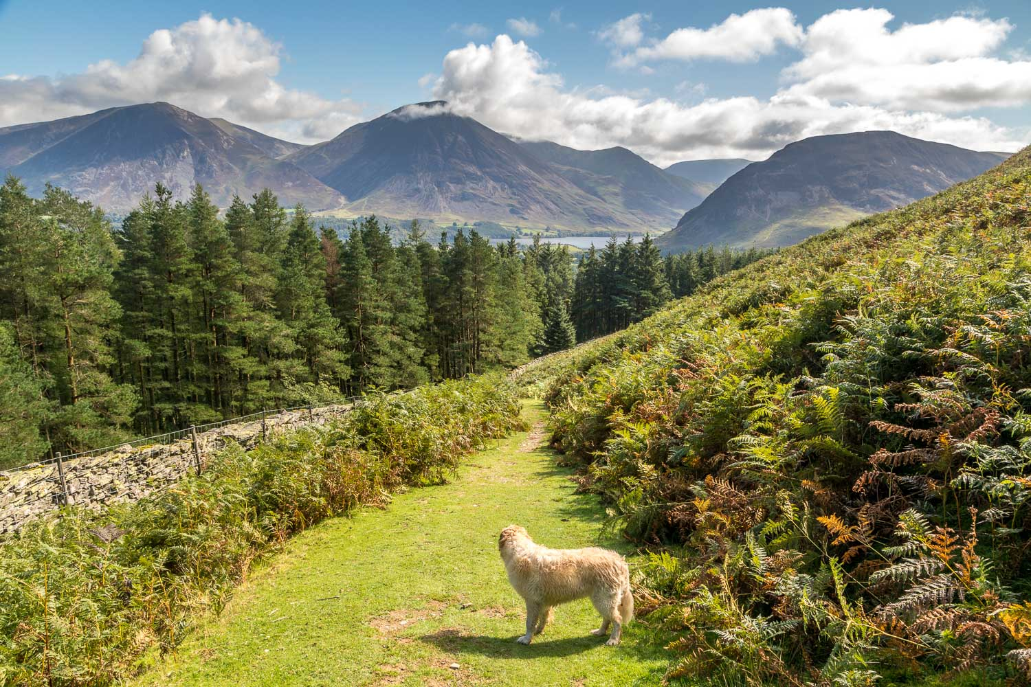 Loweswater-24-39