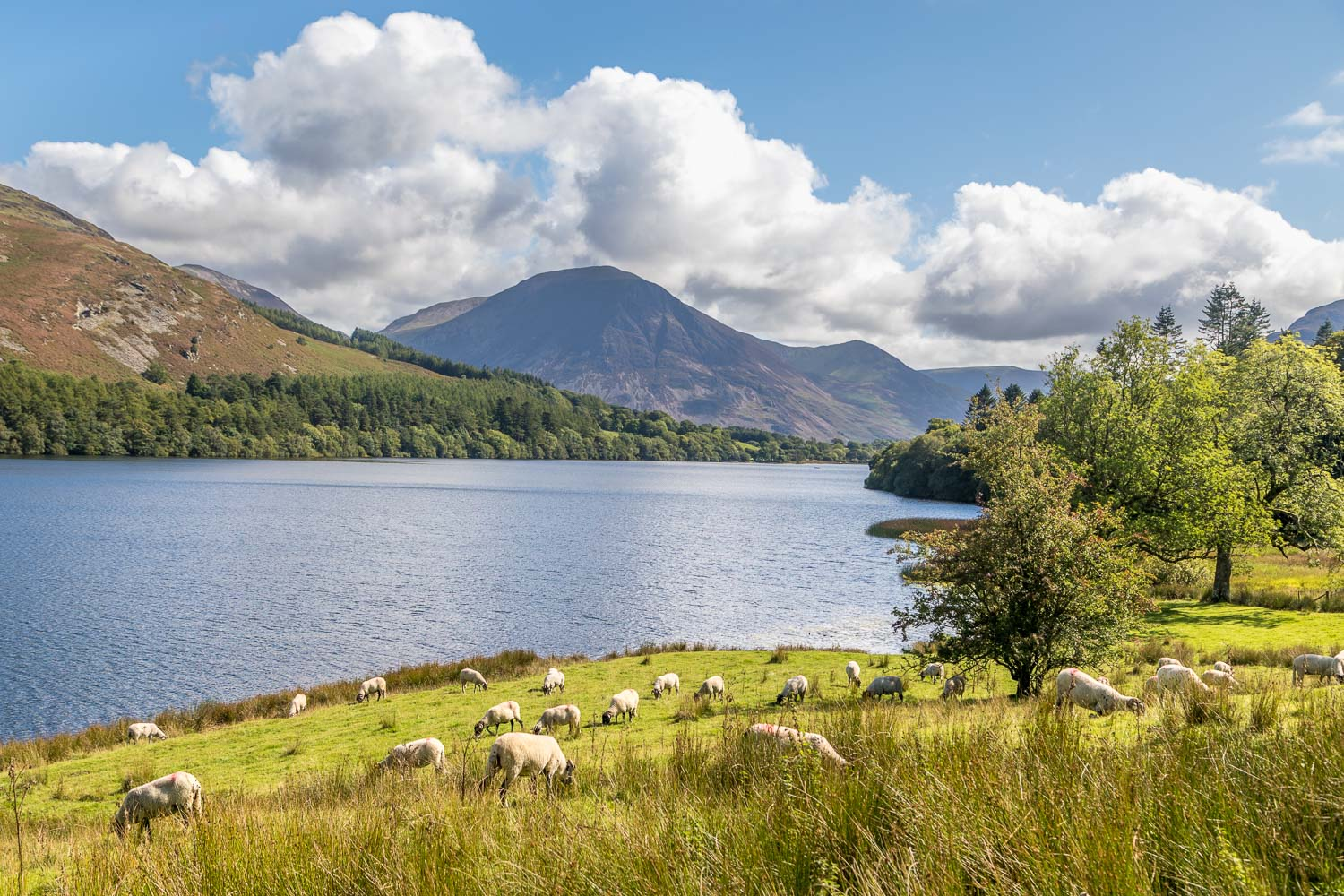Loweswater-24-56