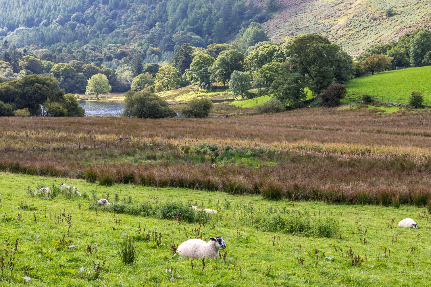 Loweswater-24-8