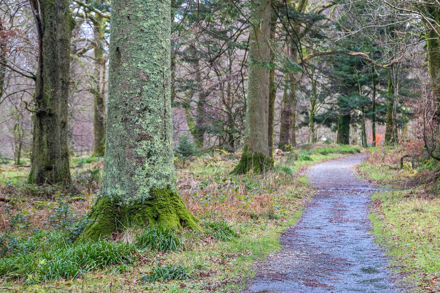 Loweswater-25-41