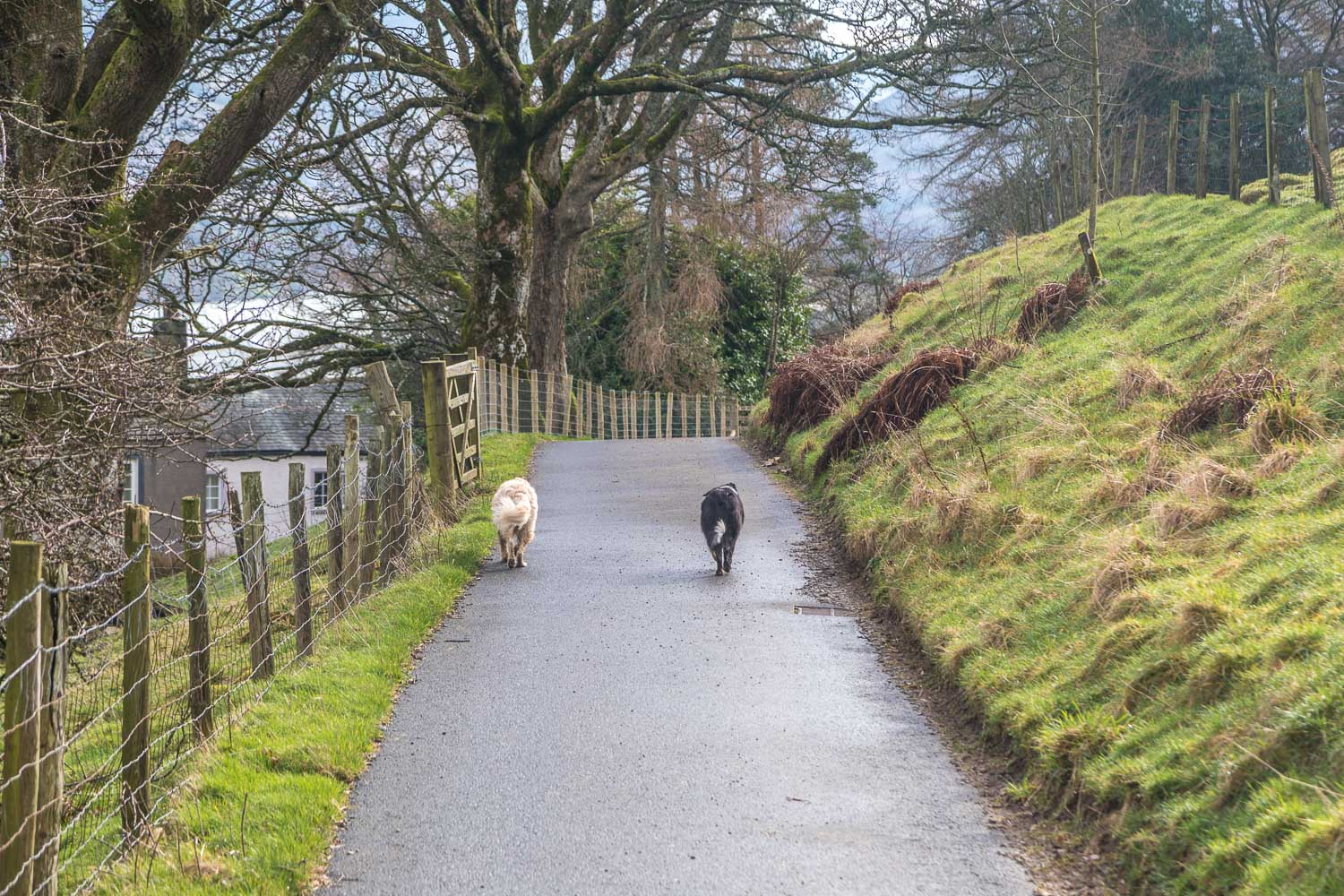 Loweswater-26-39