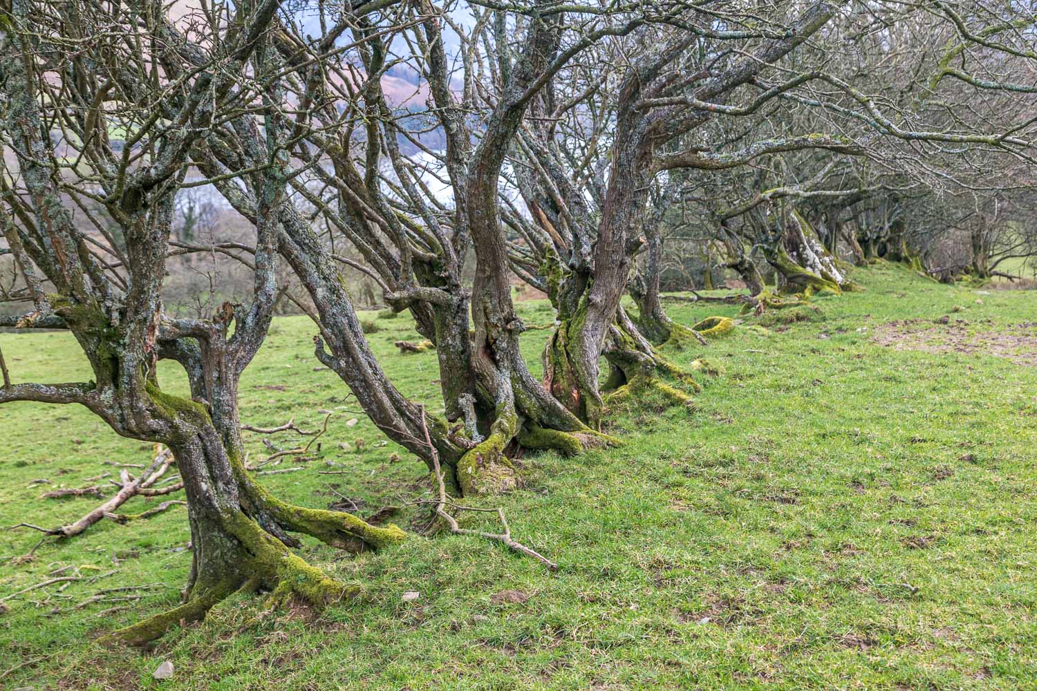 Loweswater-26-43