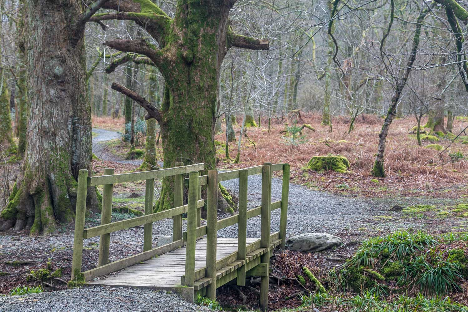 Loweswater walk, Holme Beck