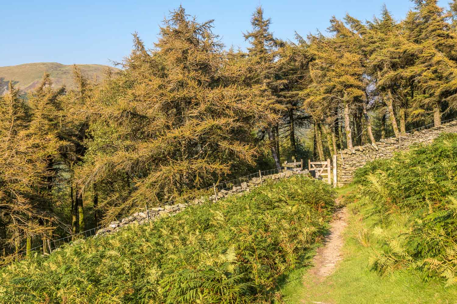 Loweswater walk, Holme Wood