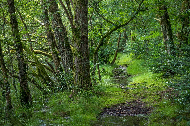 Holme Wood