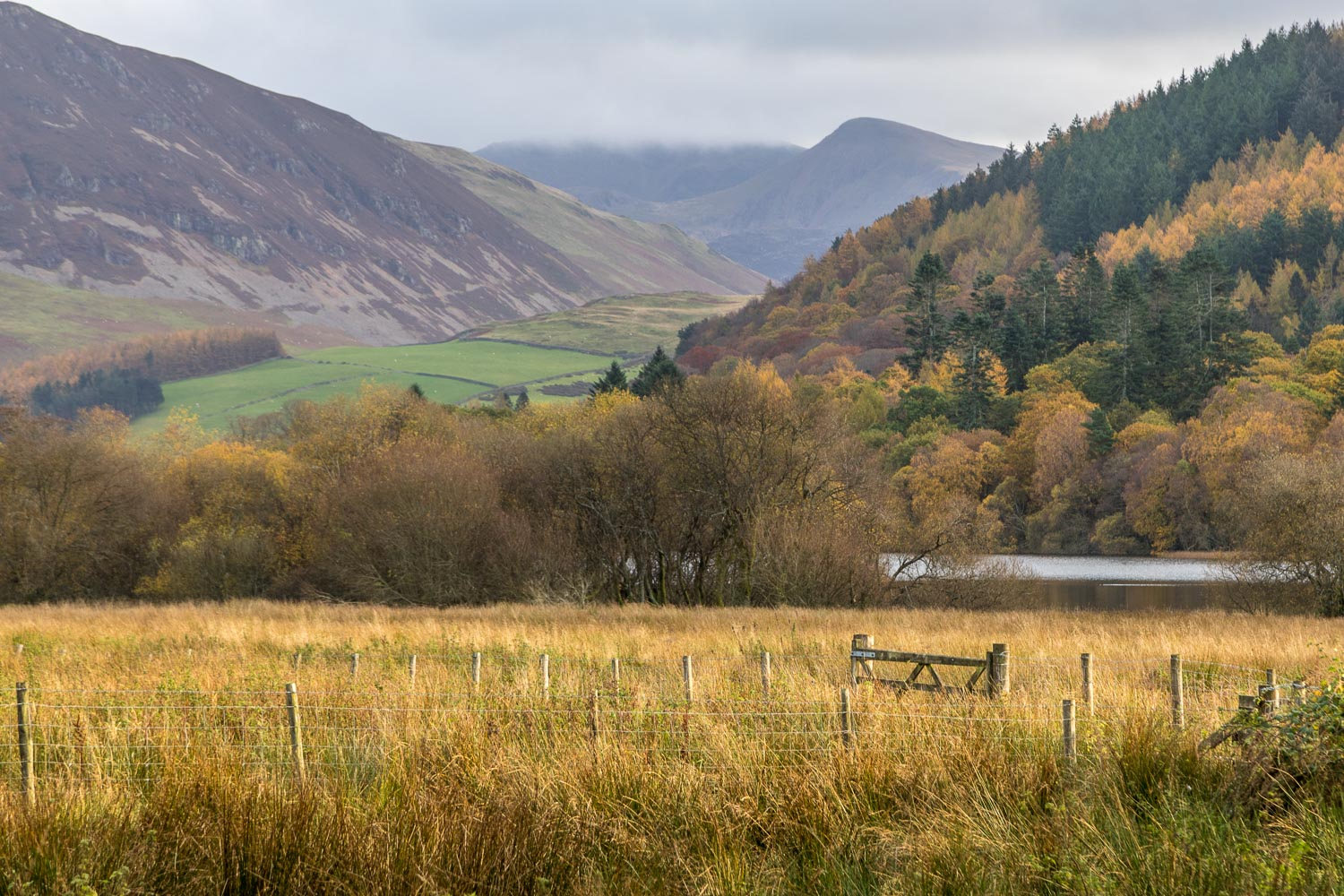 Loweswater, Holme Wood