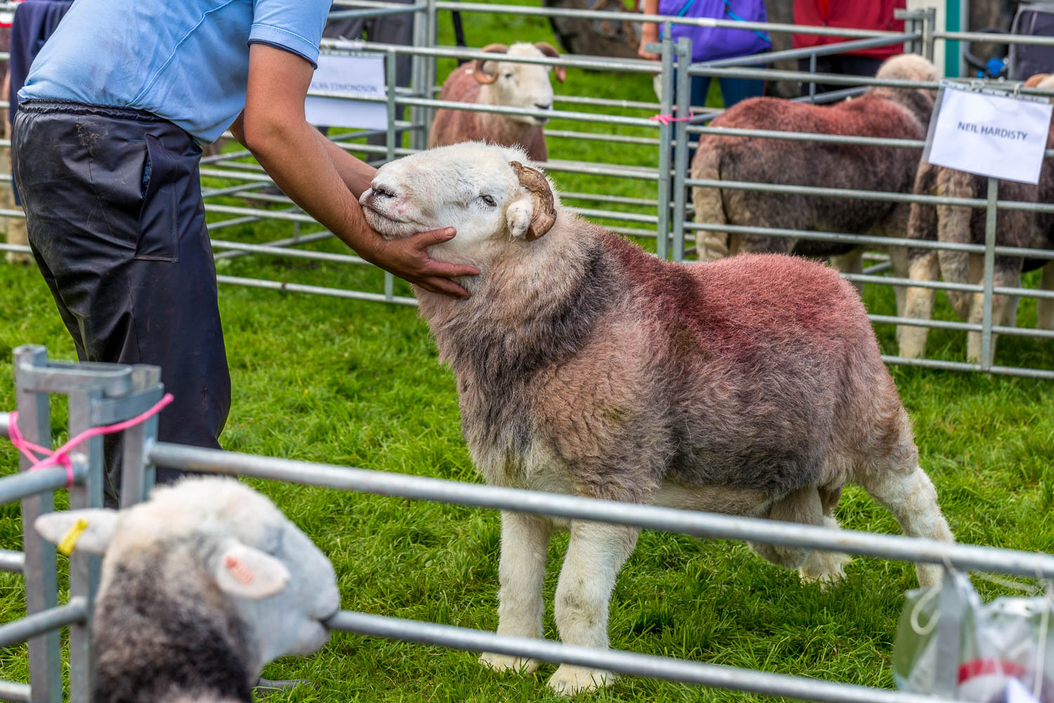 Loweswater Show 2018-10