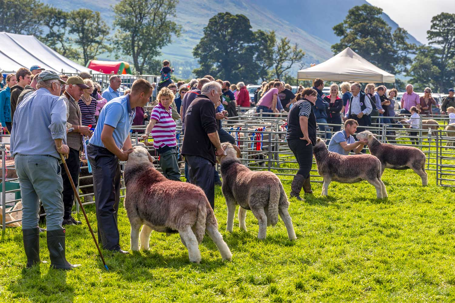 Loweswater Show 2018-15