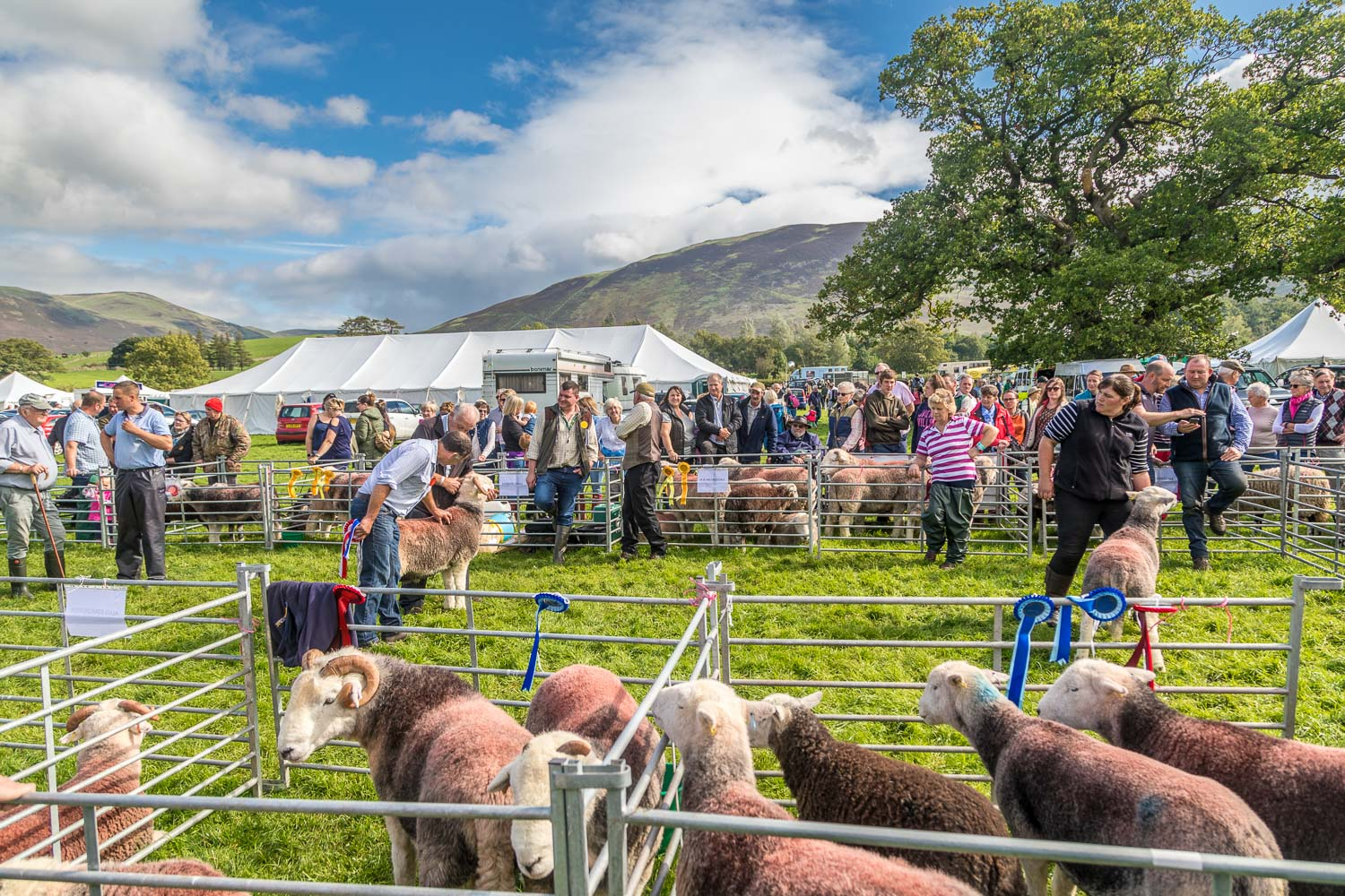 Loweswater Show 2018-18